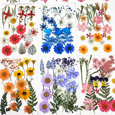 Pressed Flowers Small Dried Flowers Scrapbooking DIY Preserved Flower Decor PE