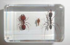 3 Ant Collection Set Big-head Ant & Weaver Ant & Termite Education Specimen