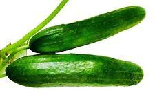 schnellkeimend und ertragreich Cucumis Sativus 100 Gurken Samen Snack Gurke
