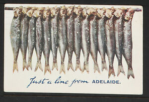 AUSTRALIA 07-ADELAIDE -Just a line from Adelaide(1910)