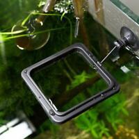 1PCS Aquarium Fish Tank Feeding Ring Floating Food Tray Quality 10cm * 10cm S8M1