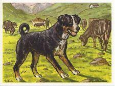 Rare 1952 Austria Art Print Body Dog Appenzeller Sennenhund Flock Guardian