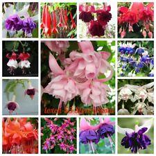 100 Fuchsia Flower Seeds Gypsy Earrings Lantern 45 Kinds Bright Beautiful Plants