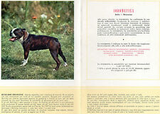 STAMPA PUBBLICITARIA FARMACIA MAESTRETTI 1956 CANE BULL DOG FRANCESE