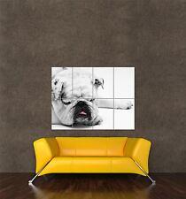 GIGANTE STAMPA POSTER natura foto BULL DOG Sleep PET Carino wrinkly pdc057