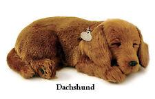DACHSHUND- Il cucciolo che respira - PERFECT PETZZZ