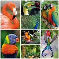 40 Postkarten EXOTISCHE VÖGEL: 8 Motive á 5 St. von tropischen Vögeln