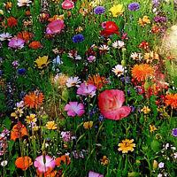 Blumenwiese, Bienenfutter, Gr. Mischung über 1000 Samen,Bauerngarten, für Bienen