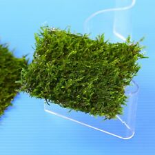 Java Moss PAD Moos Steel Mesh 8x8cm- Live Aquarium Co2 Tank Water Plants