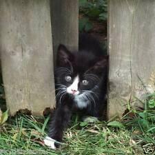 HELP RESCUED KITTEN TUX FERAL CAT RESCUE FOOD VET DONATION Rec COLOR PHOTO