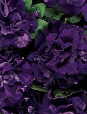 Flower seeds - Petunia - Petunia Double Cascade Blue