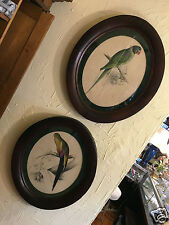 Pair Vicotrian Oval Frames Parrot Birds, signed Edward Lear, circa 1830