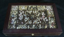 Antique Sailors Valentine Shell Collecting Box