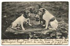 4 BULLDOG dogs real vintage photo postcard