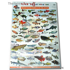 FRESH WATER FISHS POSTER FOR THE HOME COLOURFUL WALL CHART AQUARIUM FISH POSTERS