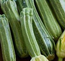 V444 Zucchini Costa Romanesque x10 seeds