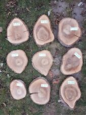 Baumscheibe Walnuss trocken (8)