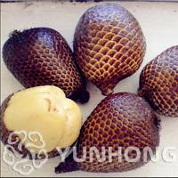 Snake Fruit 20 Pcs Seeds Healthy Bonsai Delicious Miracle Rare Plants Garden NEW