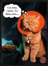 Halloween Kitten Cat Orange Tabby Costume Dracula Necklace - Greeting Card New