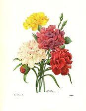 1991 Vintage REDOUTE FLOWER #89 CARNATION BOUQUET VAR Color Art Print Lithograph