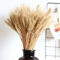 50Pcs/lot Real Wheat Ear Flower Natural Dried Flowers Wedding Party DIY Decor
