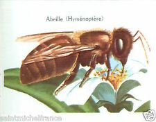 IMAGE CARD 60s Abeille Anthophila Hyménoptère Hymenoptera Bee