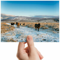 "Dartmoor Ponies Horses Small Photograph 6"" x 4"" Art Print Photo Gift #3227"