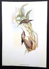 HUMMING BIRDS - 1980's original offset double prints (front & back)  #3