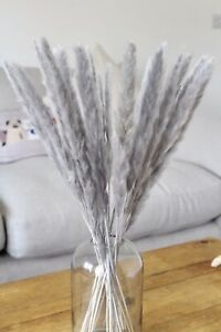 Dried pampas grass large tall grey 30 stems 50cm tall,fluffy dry flower boho uk