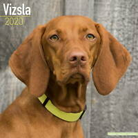 Vizsla Calendar 2020 Premium Dog Breed Calendars