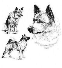 Norwegian Elkhound - 1963 Vintage Dog Print - Matted *