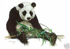 Pauline Jay - Panda with Bamboo - MEDICI POSTCARDS