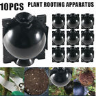 10x Plant Rooting Devices Growing Grafting Box High Pressure Propagation Ball