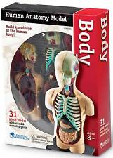 Learning Resources Human Body Anatomy Model - NEW