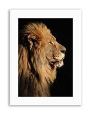 BIG MALE AFRICAN LION Picture Portrait Canvas art Prints