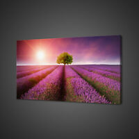 STUNNING LAVENDER FLOWERS FIELD BOX MOUNTED CANVAS PRINT WALL ART PICTURE PHOTO