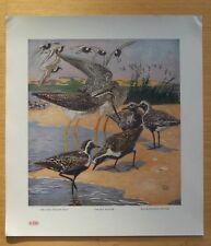 "AMERICAN GAME BIRDS LYNN BOGUE HUNT 1917 PORTFOLIO 14 3/4"" X 13""  COMPLETE SET"
