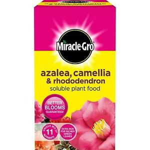 Miracle-Gro Azalea Camellia & Rhododendron - Soluble Ericaceous Plant Food - 1kg