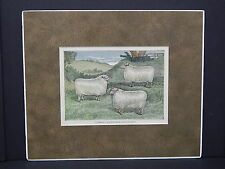 Sheep c1890 Matted Ready To Frame S2 Cotswold Leicester & Lincoln Sheep #01