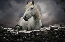 Large Framed Print - White Stallion Looking Over a Stone Wall (Horse Animal Art)