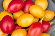 Graines de Tamarillo 50 Jaune + 50 Rouge 'Cyphomandra Betaceum Mix' tree seeds