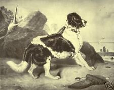 "NEWFOUNDLAND SIR EDWIN LANDSEER DOG ART PRINT ""ENGRAVING"" - ""Off to the Rescue"""