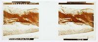 Amburgo Parc Zoologico Hagenbeck Foto Stereo PL58L24n Placca Lente Vintage