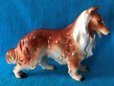Large Collie Dog