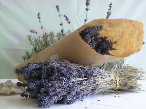 """Beautiful Smell Good 8""""-10"""" Dried Lavender Start with 100+ Stems"""
