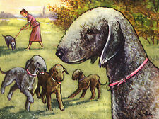 BEDLINGTON TERRIER CHARMING DOG GREETINGS NOTE CARD GROUP OF DOGS PLAYING