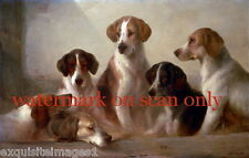 Vintage Art~Foxhound Foxhounds or Walker Hounds~ Dog~Dogs~New Large Note Cards