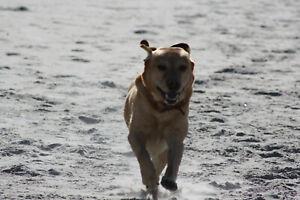 Domain Urlaub-Mit-Dem-Hund.biz Eg Travel Agency Tierurlaub to Travel Urlaub