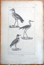 Pluviera Collier/Grand Pluvier/Echasse - 1830s French Bird Print