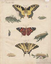Insecten. Tafel XXV. Schmetterlinge: Kupferstich, Bertuch